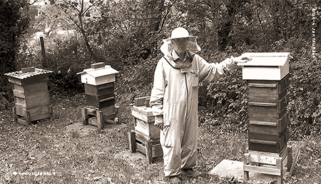 David Heaf, natural beekeeper in Great Britain