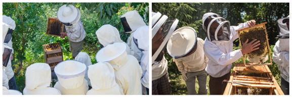 formation et stage d'apiculture naturelle
