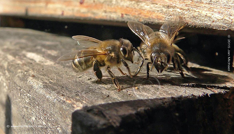 gardien d'abeilles