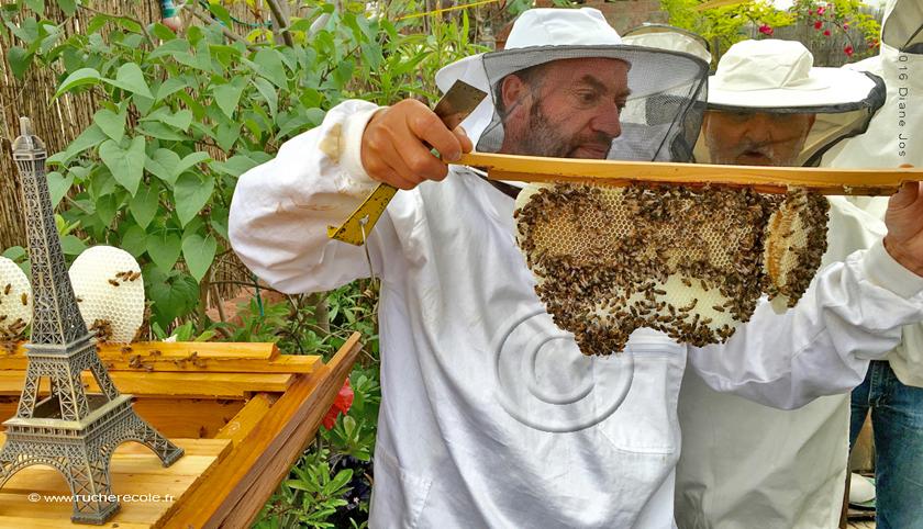 stage d'apiculture naturelle Paris le 3 août 2016
