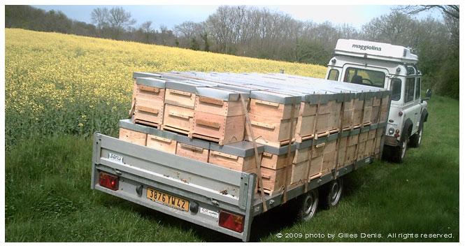 apiculture pastorale