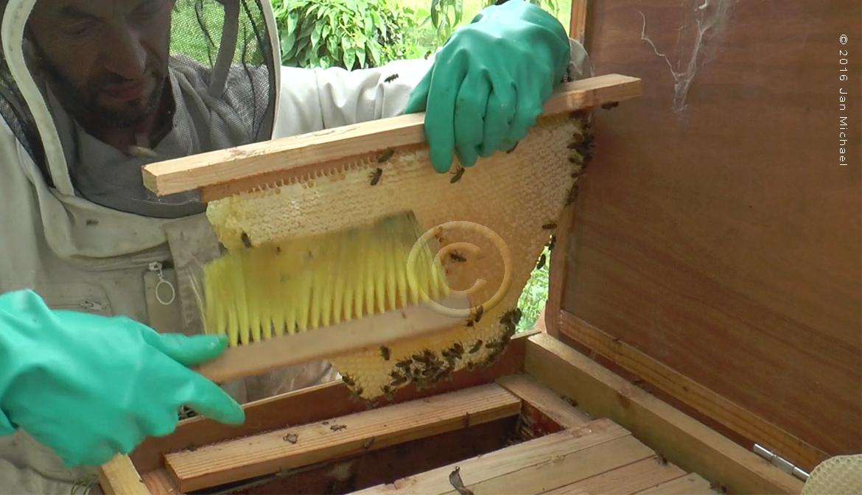brosse à abeilles