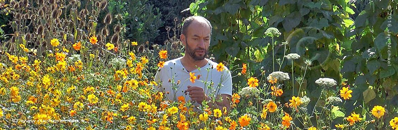 olivier Duprez fleur de cosmos
