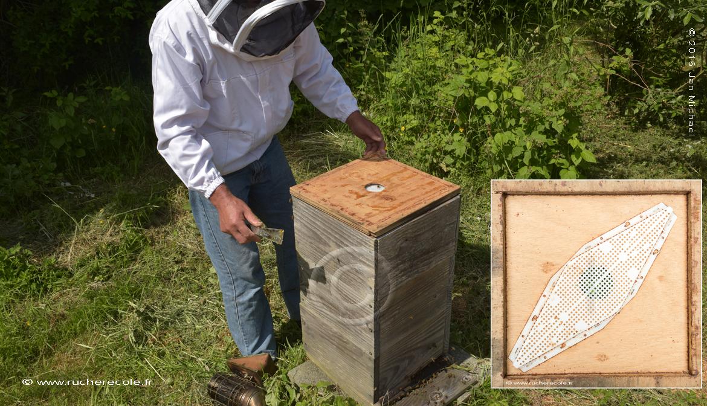 chasse abeille pour future récolte