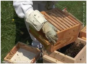gants en apiculture