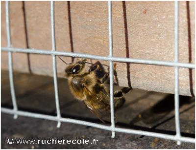 grillage portière ruche