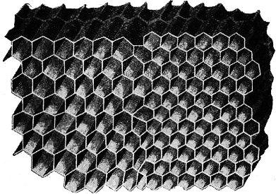 aoiculture en ruche Warré