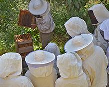 stage ruche Warré -rucher école Villa le Bosquet