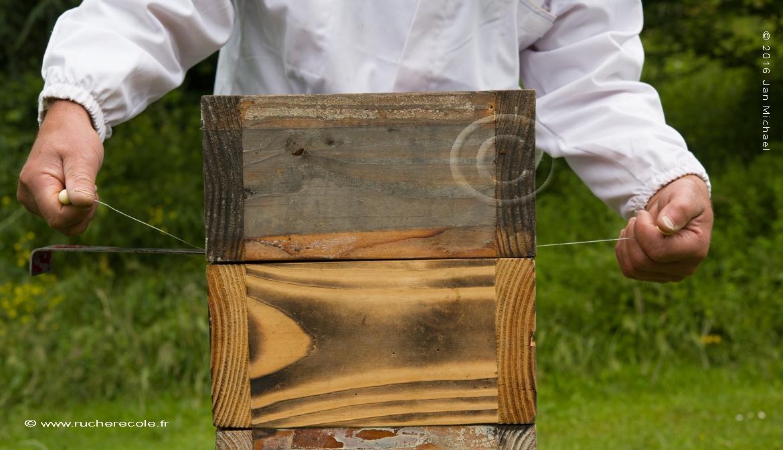 recolte ruche japonaise