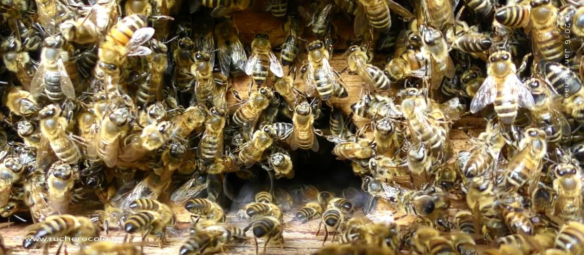 trou de vol - ruche kranitzring