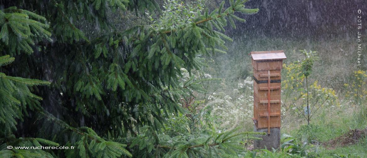 ruche Warré dans la plui