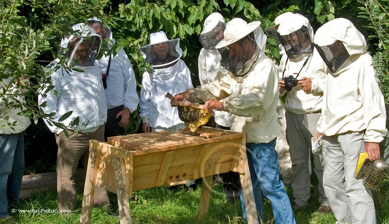 intervention dans une ruche Kényane
