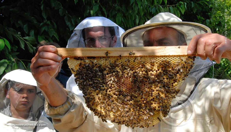 intervertion sur notre ruche Kényane (ruche Horizontale)
