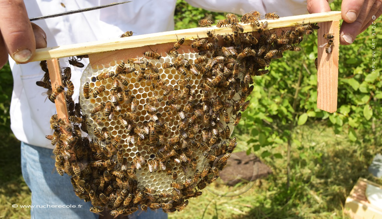 Demi cadre ruche Warré