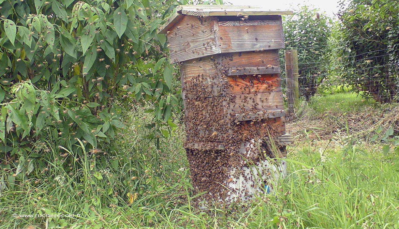 Aménagement naturel dans notre ruche Warré