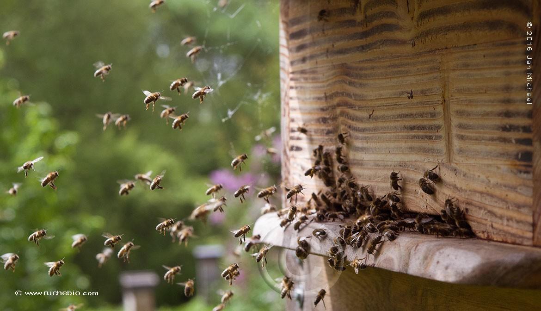 """La ruche Allemande """"Bienenkiste"""" dans notre Jardin en Normandie - rucher école Villa le Bosquet"""