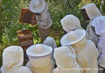 Les stages rucher école Villa le Bosquet