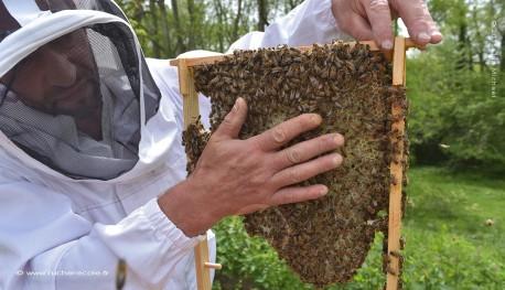 stage d'apiculture Warré