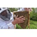 Stage apiculture naturelle en Normandie (14) la ruche Warré et la ruche Horizontale