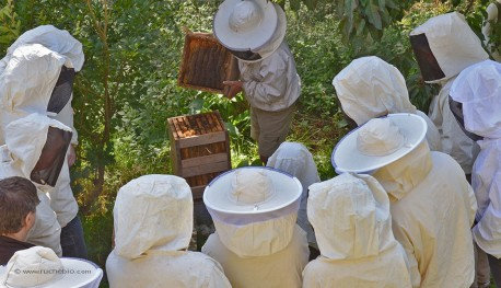 stage d'apiculture Warré