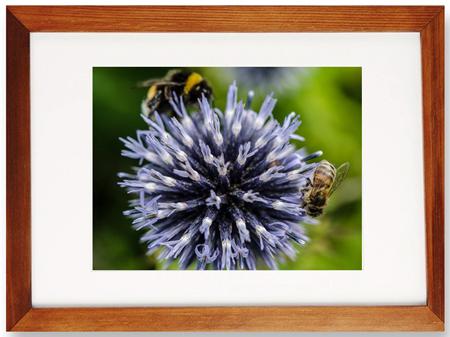 édition nature et abeilles