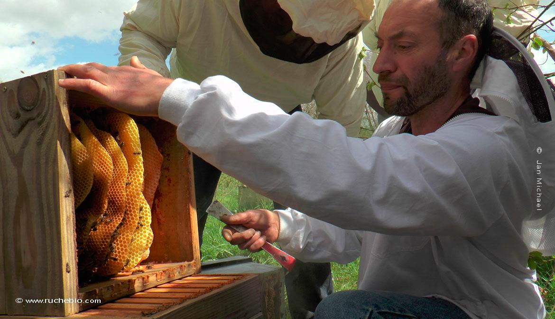 Olivier Duprez, apiculteur et formarteur en ruche Warré
