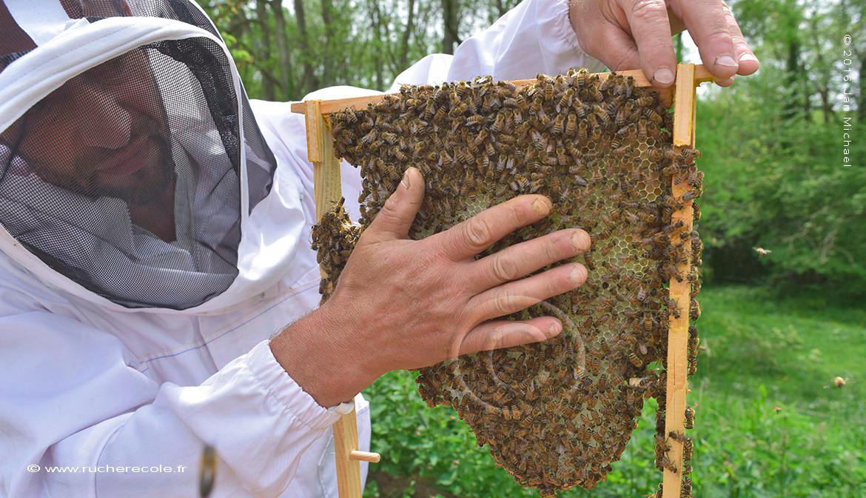 Olivier Duprez, apiculteur naturel