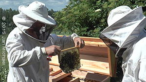 La ruche Warré Horizontale
