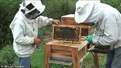 La ruche extensible