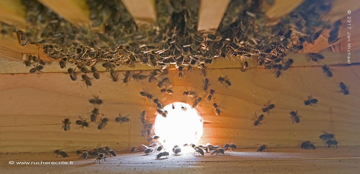 trou de vol ruche Dadant écologique