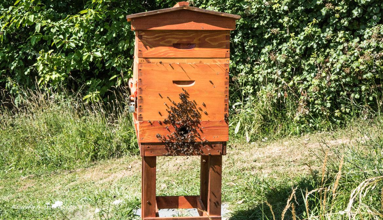 ruche Dadant écologique -rucher école villa le Bosquet