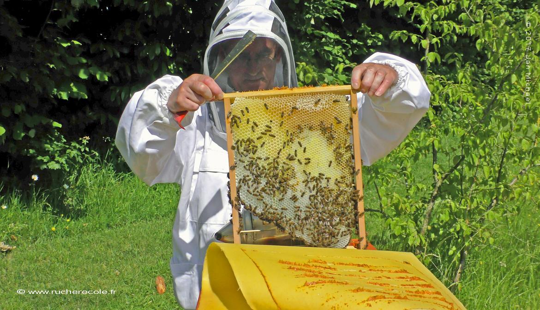 l'apiculture à grands cadres - ruche Mellifera