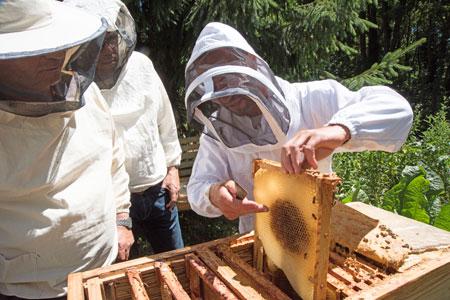 cadre ruche Mellifera