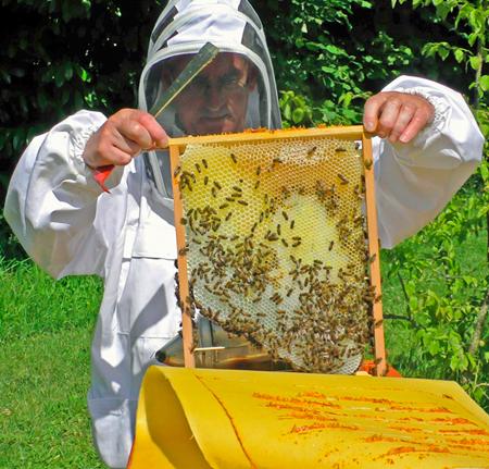 Jaques Hue, apiculteur en ruche à grands cadres
