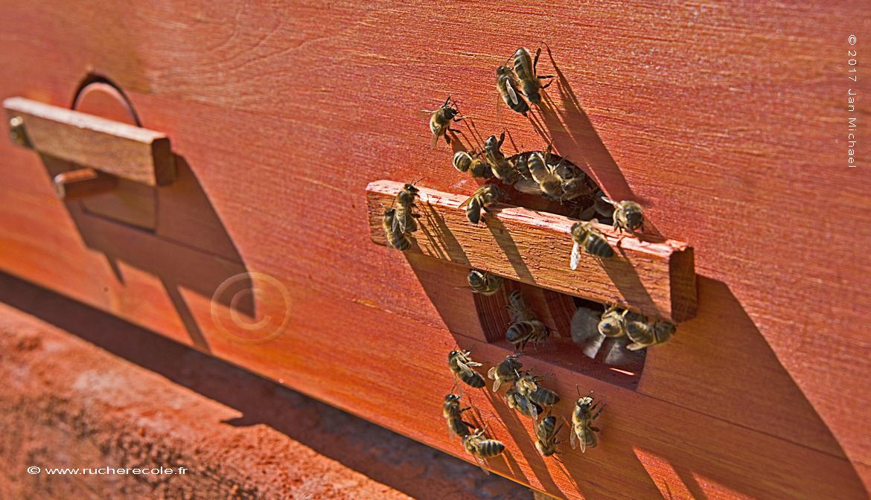 trou de vol - ruche Mellifera