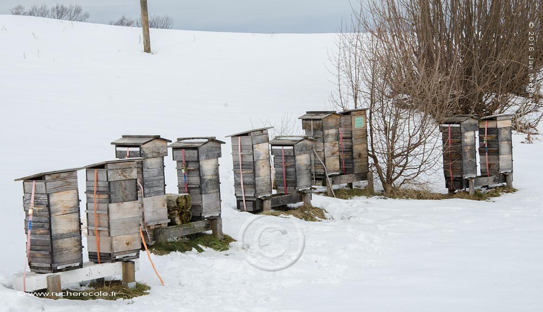 rucher Warré en Suisse