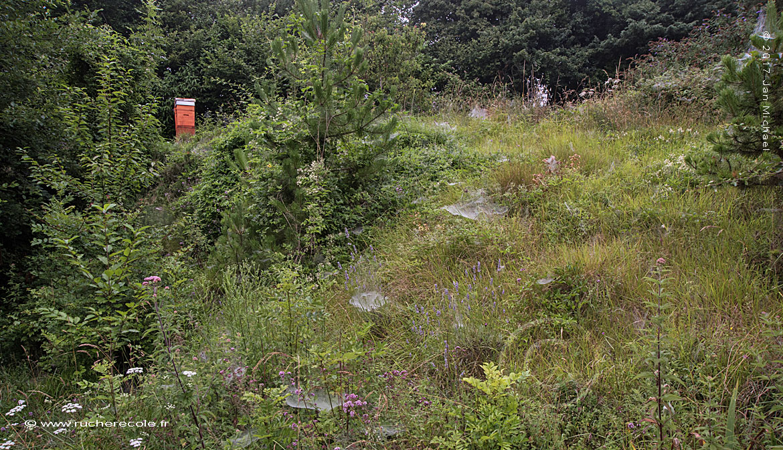 ruche Voirnot - jardin rucher école Villa le Bosquet