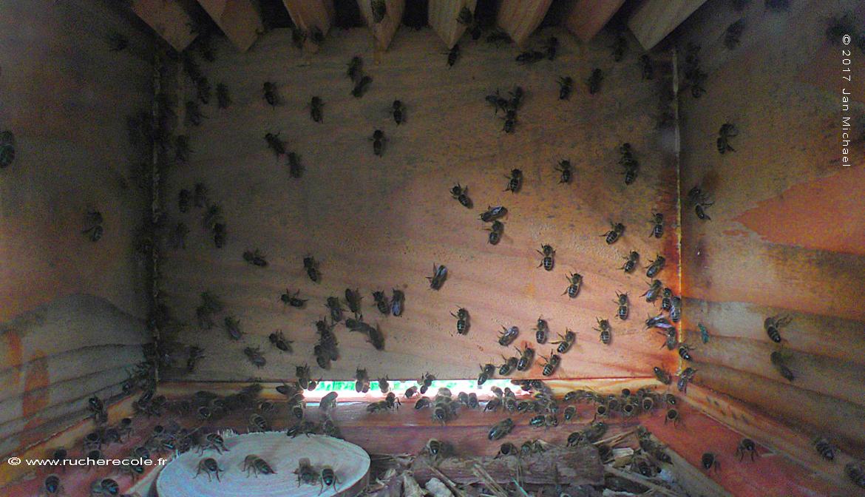 https://www.rucherecole.fr/content/27-ruche-warre