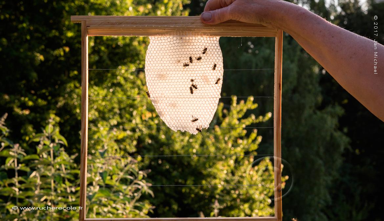 rayon de cire jeun-ruche Voirnot
