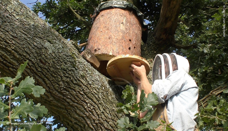 Matthews summerville log hive treebeekeeper in Great Britain