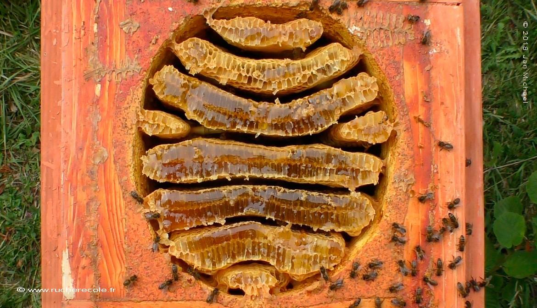 """Rayaons de miel dans la ruche speciale """"Warré plus"""""""