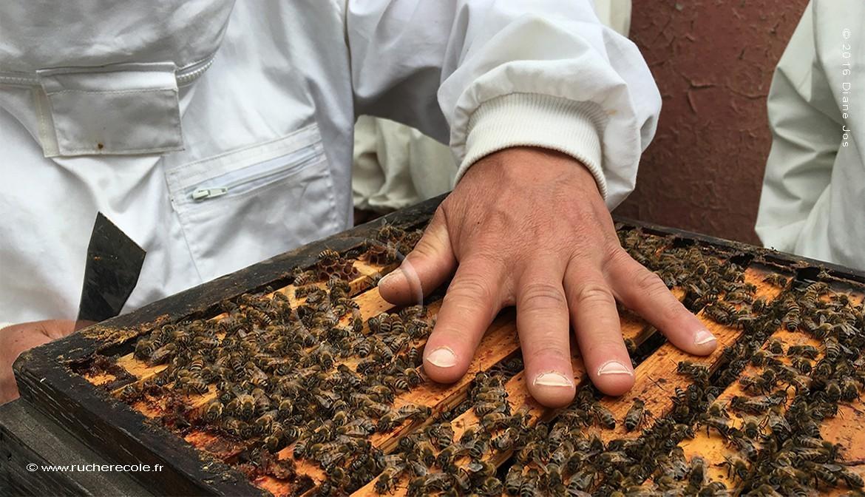 Notre stage apiculture naturelle en ruche Warré