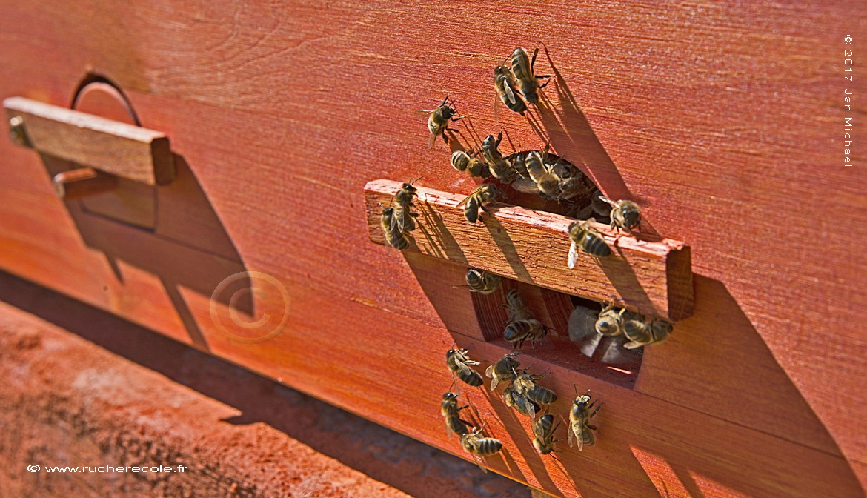 trou de vol - ruche horizontale Mellifera