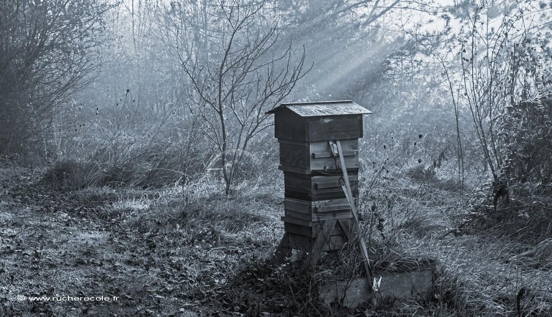 ruche Warré dans notre Jardin sauvage - rucher école Villa le Bosquet