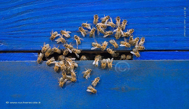Au trou de vol - ruche Warré classique