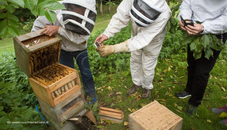 Notre stage d'apiculture naturelle en Normandie