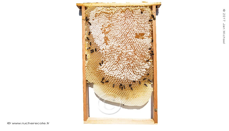 rayon de miel - ruche Mellifera