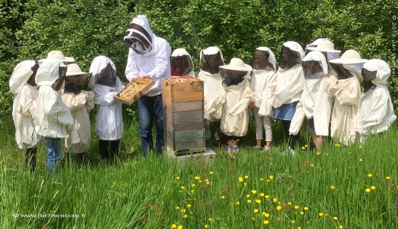 ruche Warré et enfants