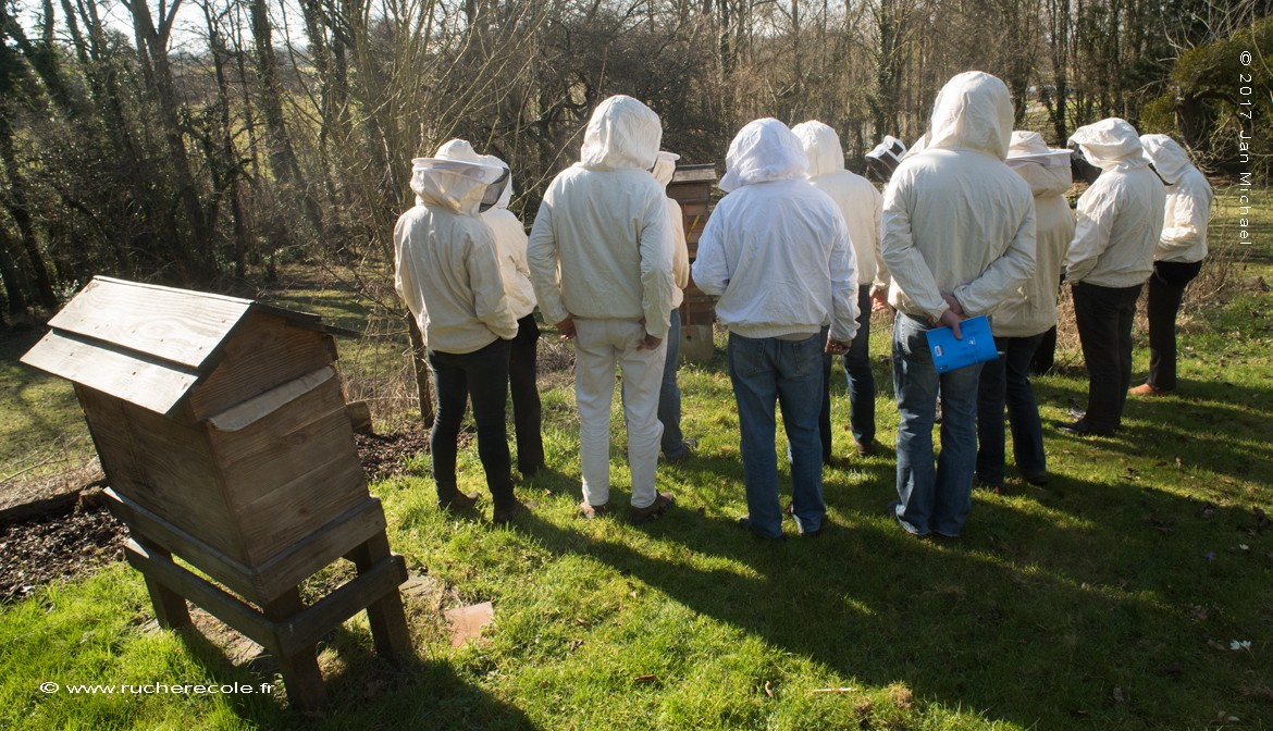 stage d'apiculture naturelle