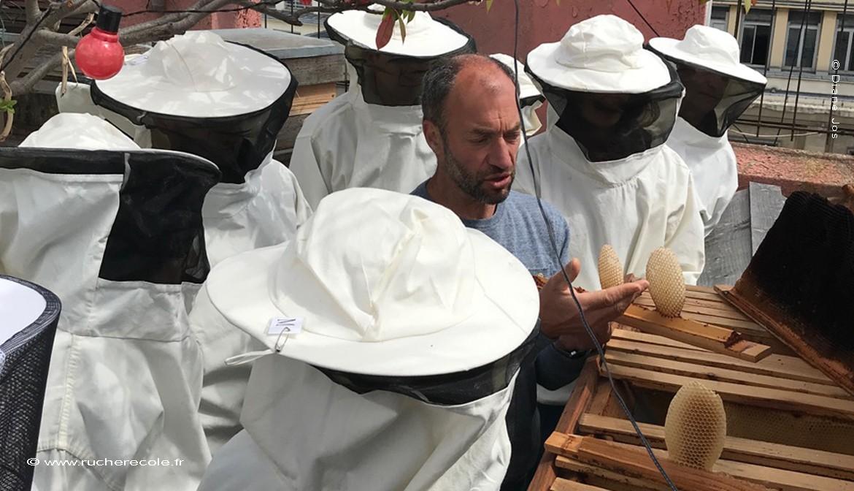 notre stage en apiculture naturelle à Paris en centre ville